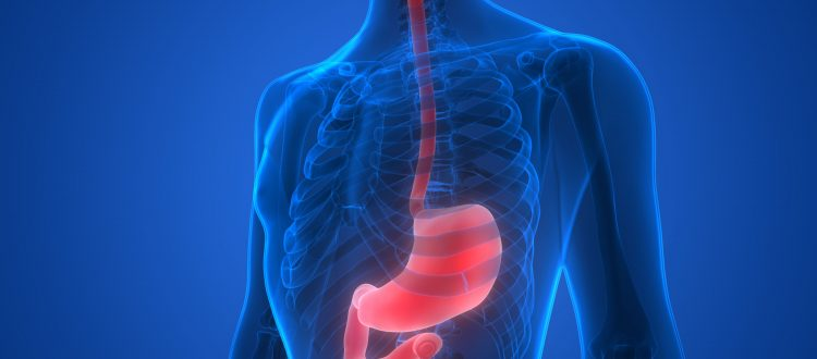 esophagus and stomach cancer